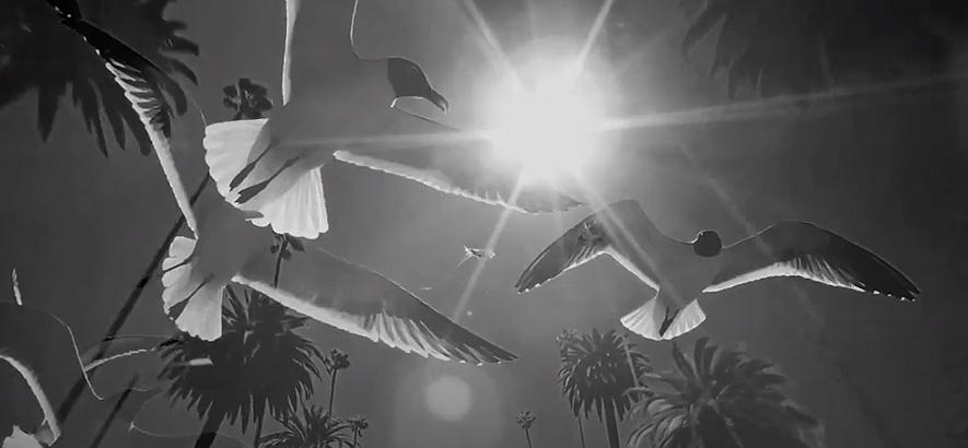 """Filmstill aus dem Musikvideo von Mieke Miami – """"Californio""""."""