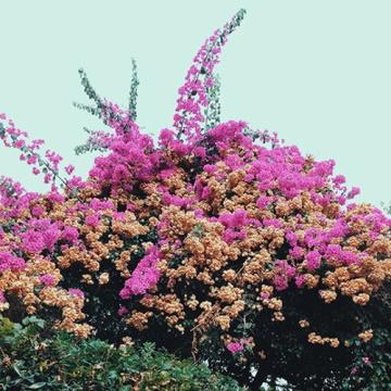 """Albumcover von JaySom–""""TurnInto""""(2016)"""